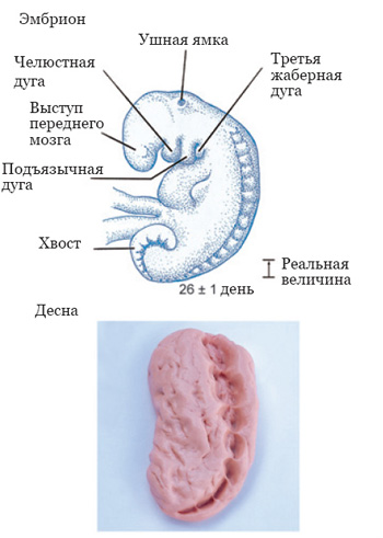 The_Quran_on_Human_Embryonic_Development_007