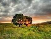 irlandiya-leto-pole-derevya